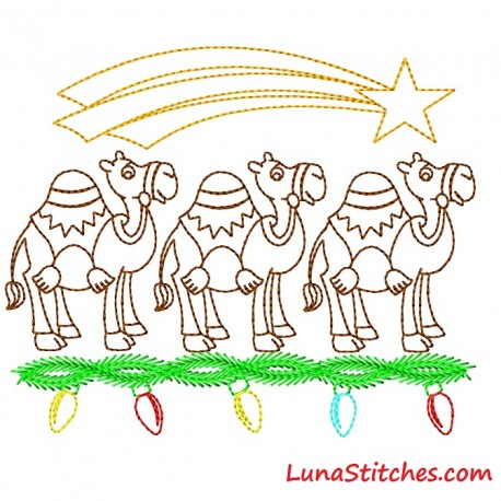 Camels Star Lights